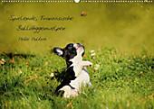 9783660063677 - Heike Hultsch: Spielende, Französische Bulldoggenwelpen (Posterbuch DIN A4 quer) - Book